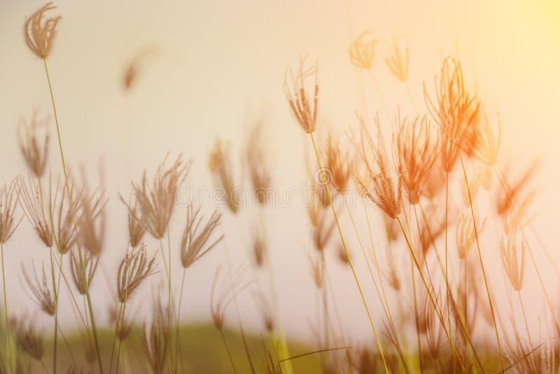 草的领域在日落期间的 免版税库存照片