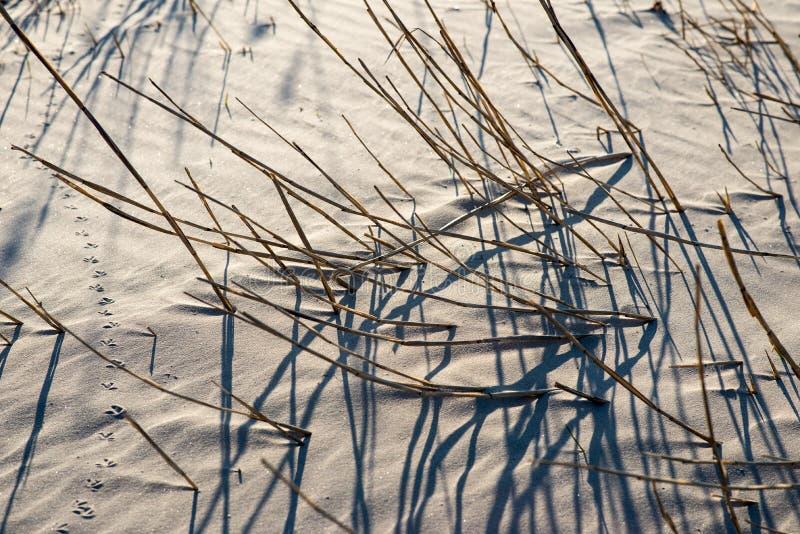 从草的阴影在海滩 库存照片