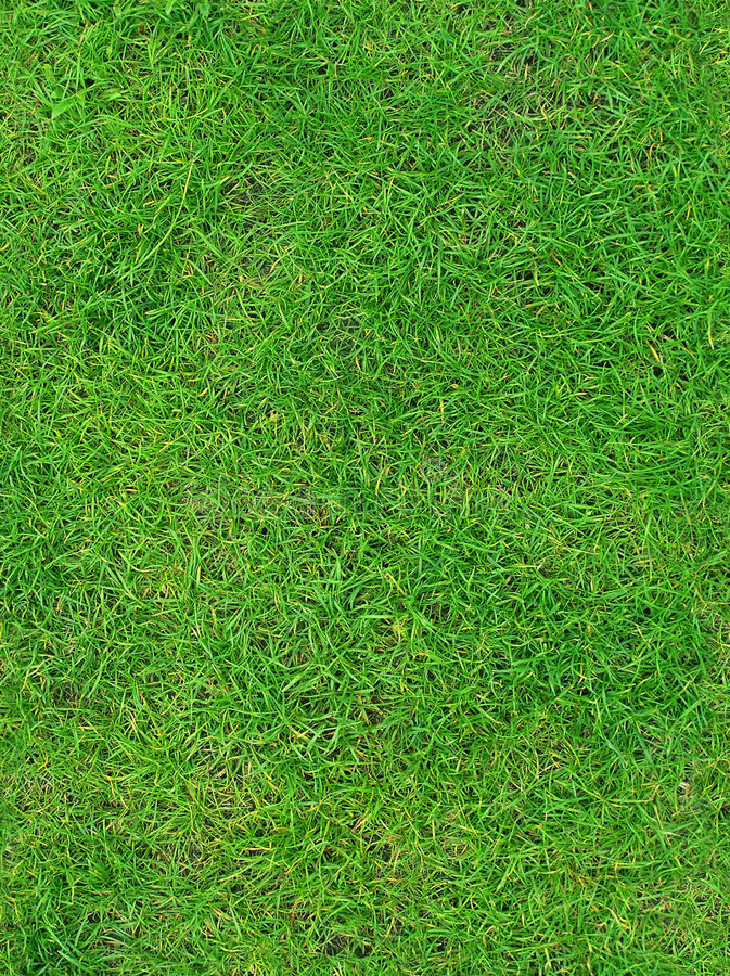 草绿色夏天纹理 库存图片