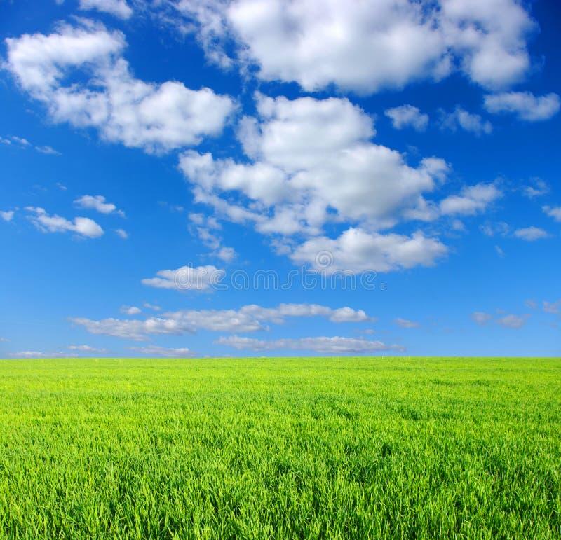 草绿色天空 免版税库存照片