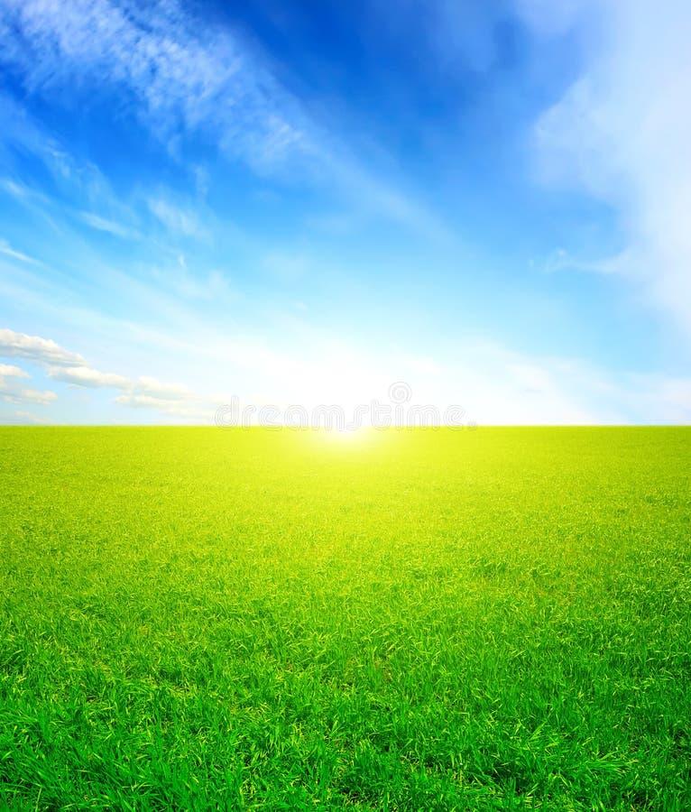 草绿色天空 免版税图库摄影