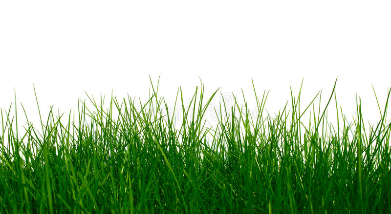 草绿色年轻人 免版税库存图片