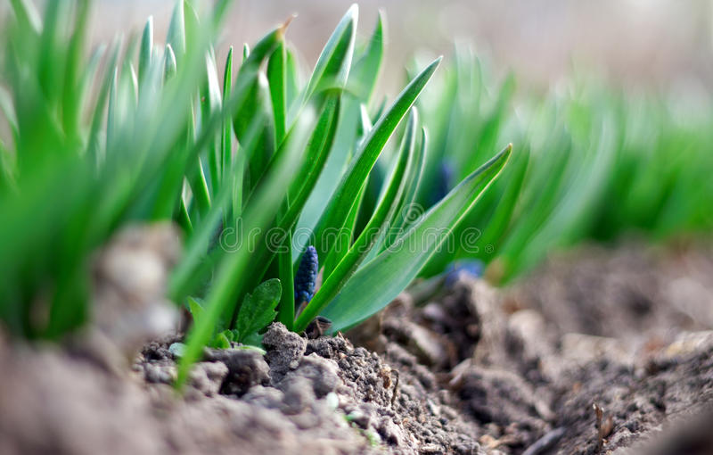 草绿色春天年轻人 库存照片