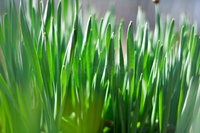 草绿色春天年轻人 库存图片