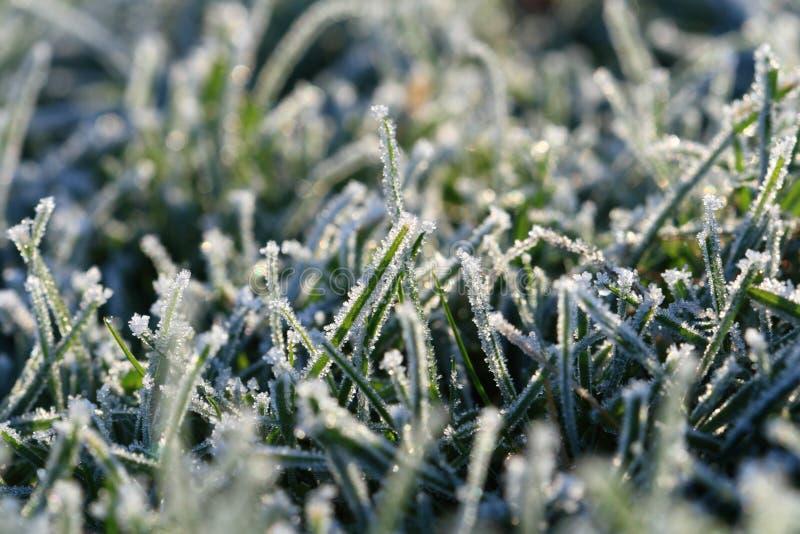 草绿色树冰 库存图片