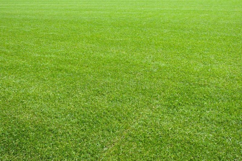 草绿色草坪自然纹理 免版税库存图片