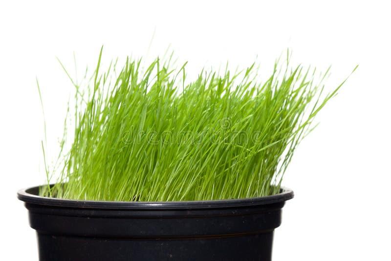 草绿色长的工厂罐 图库摄影