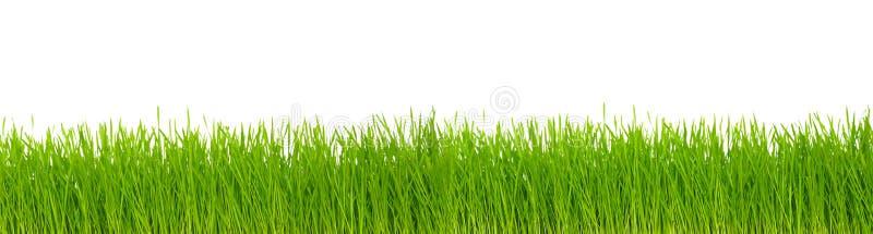 草绿色 图库摄影