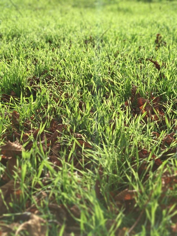草绿色makro机动性照片 库存图片