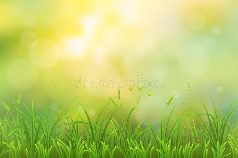 绿草背景 皇族释放例证