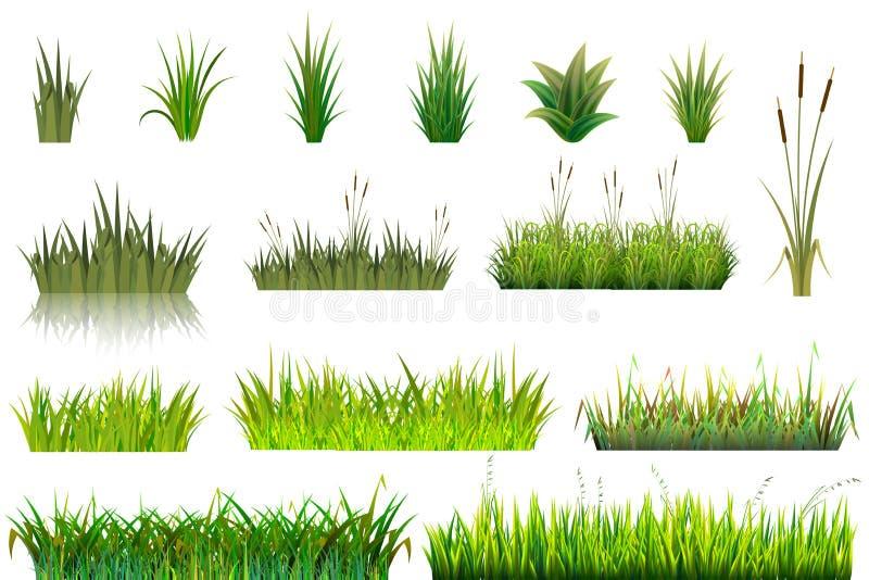 草草原或grassplot和绿色象草的领域例证从事园艺的集合花卉植物在白色隔绝的庭院里 库存例证