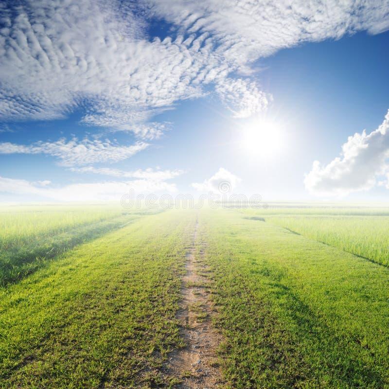 草草地和太阳天空方式  库存图片