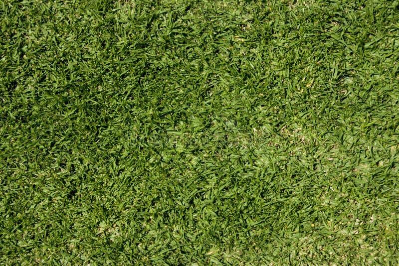 草草坪 库存照片
