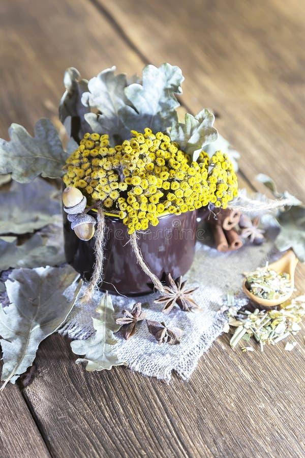 草药、同种疗法、医药草本的汇集茶的和医学 干艾菊花和橡木叶子在杯子 库存图片