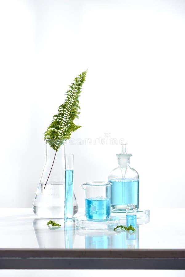 草药自然有机和科学玻璃器皿,研究与开发概念 免版税库存图片