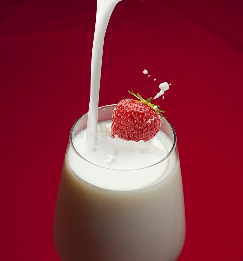 草莓下落到牛奶里和飞溅有红色背景 免版税图库摄影