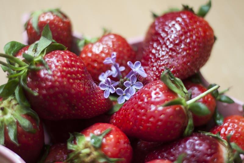 草莓和丁香花 免版税库存照片