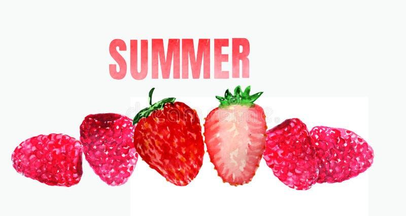 草莓和莓在白色背景 库存例证
