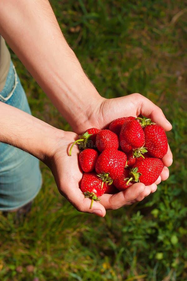 草莓在男性手上 图库摄影