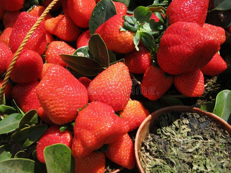 草莓堆 免版税库存图片