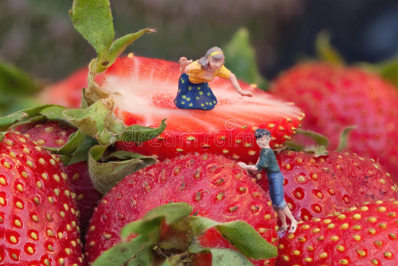 草莓收获 库存照片