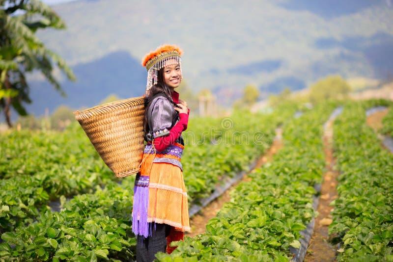 草莓领域农场 库存图片