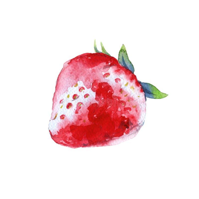 草莓 背景查出的白色 额嘴装饰飞行例证图象其纸部分燕子水彩 库存例证