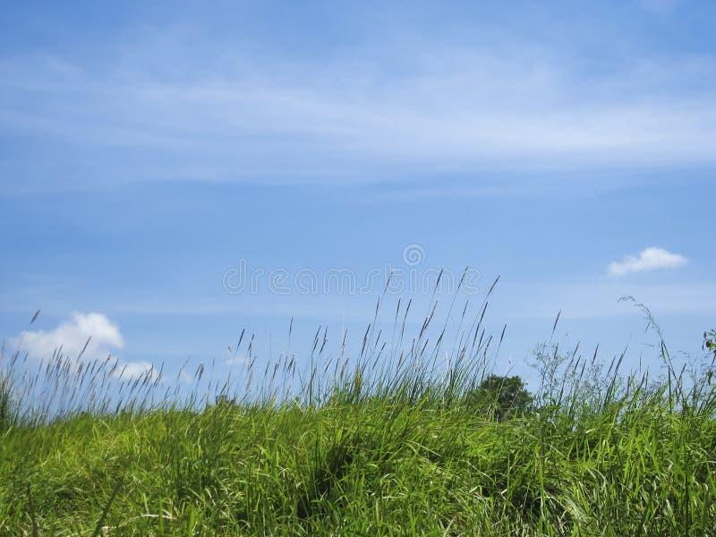 Download 绿草蓝天自然背景 库存图片. 图片 包括有 未割减, 蓝色, 背包, 没人, 通用, 天空, 外面, 农村 - 30338973