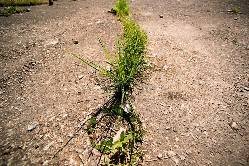 草通过沥青增长 库存照片