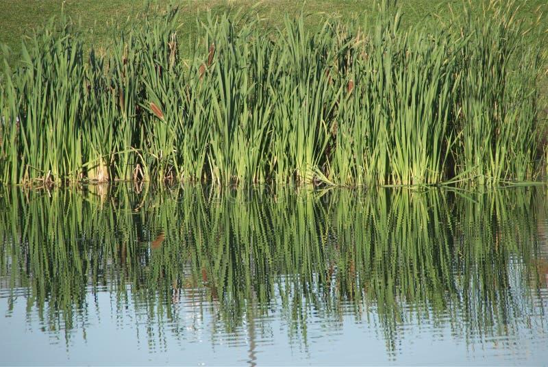 草通配被反射的水 免版税图库摄影