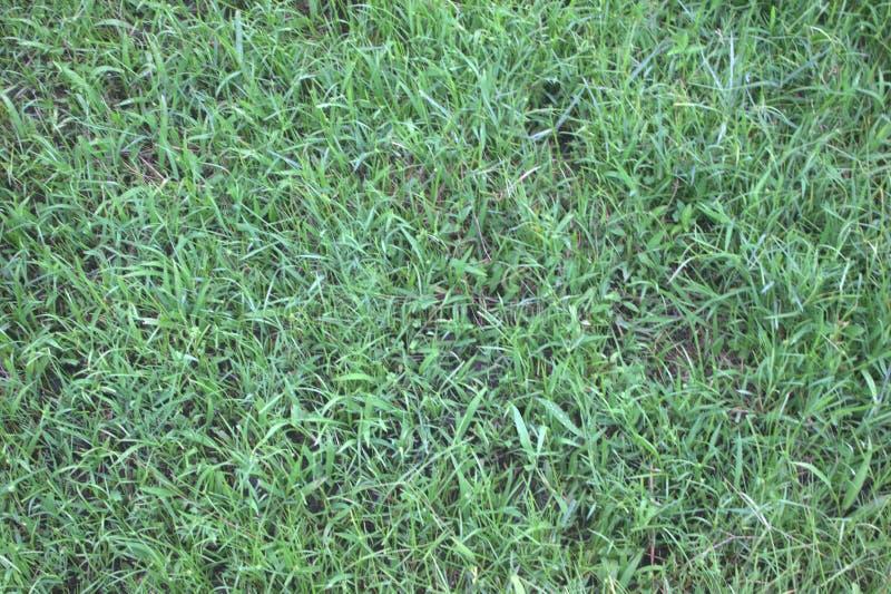 绿草领域纹理和背景 免版税库存照片