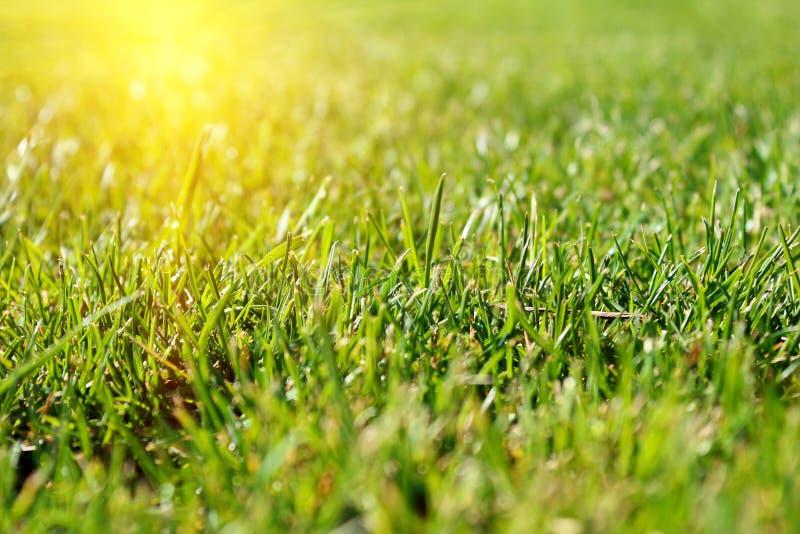 Download 绿草领域 库存图片. 图片 包括有 抽象, 橄榄球, 植物群, 特写镜头, 花卉, 干净, 水平, 传记 - 30327295