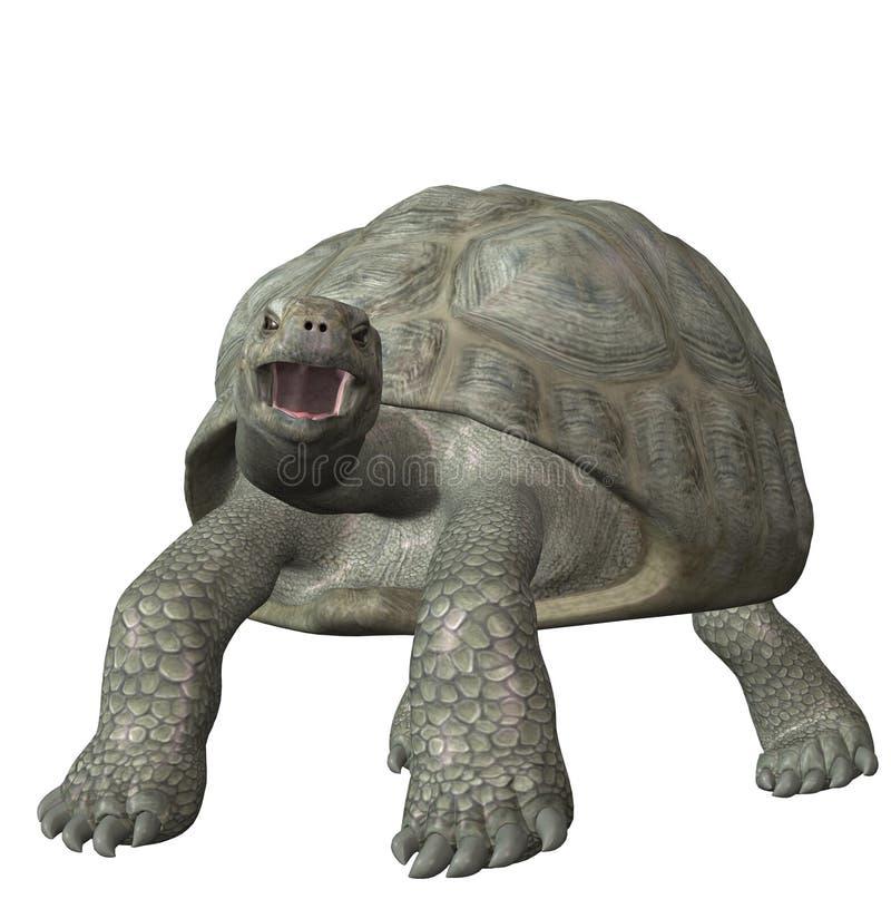 Download 草龟 库存照片. 图片 包括有 宠物, toolmaking的, 敌意, 巨型, 绿色, 爬行动物 - 3673920
