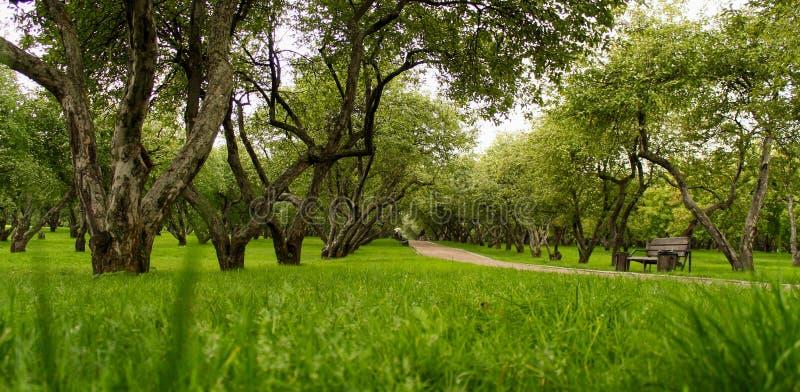 绿草,树苹果灌木 库存照片