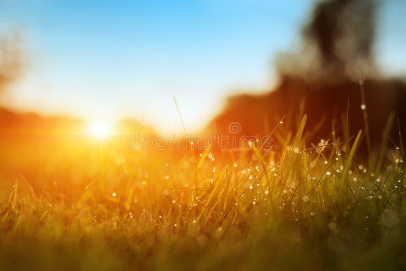 草 与露滴特写镜头的新鲜的绿色春天草 晒裂 软绵绵地集中 抽象背景本质 E 免版税库存图片
