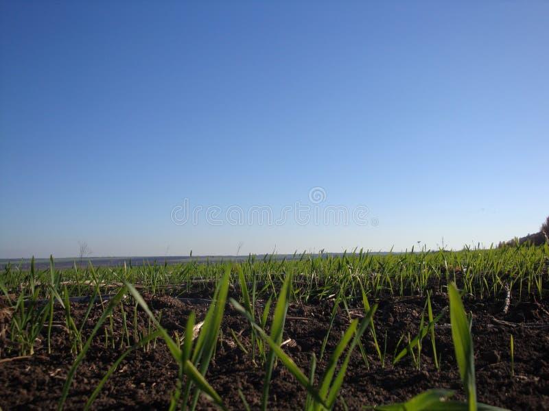 草 与露滴特写镜头的新鲜的绿色春天草 晒裂 免版税库存图片