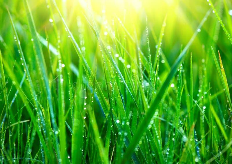 草 与露滴特写镜头的新鲜的绿草 库存图片