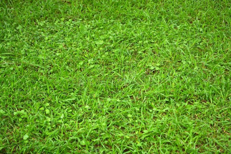 草 自然 拉长的域临时排字工人例证 免版税库存图片
