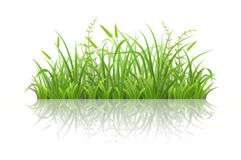草绿色反映 库存例证