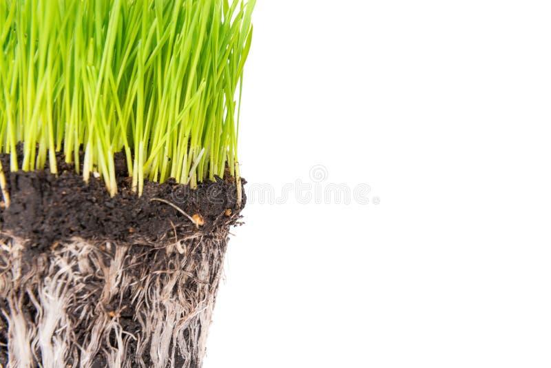 草绿色土壤 库存照片