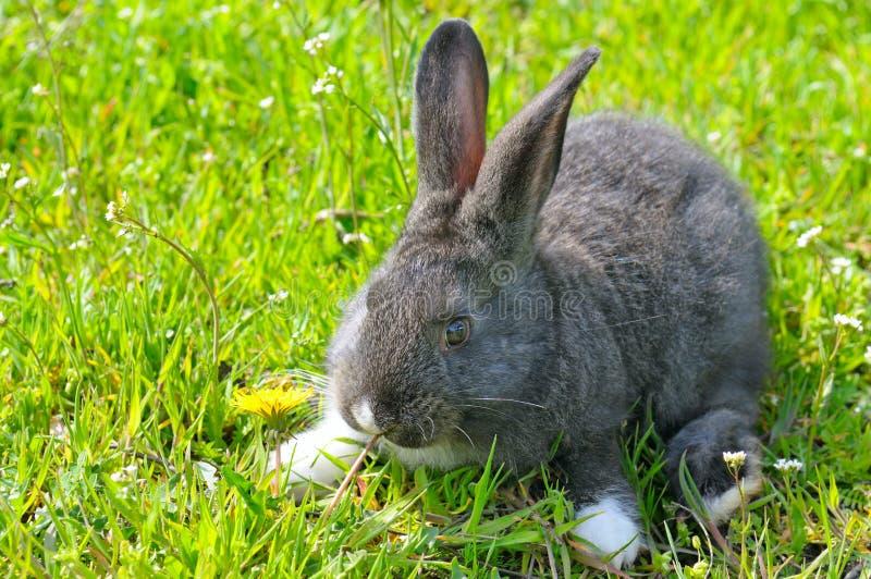 草绿色小的兔子 免版税库存图片