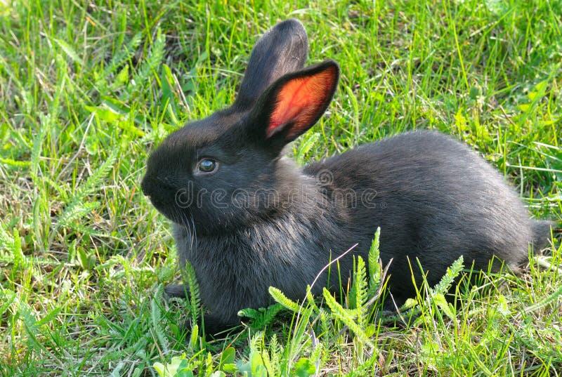 草绿色小的兔子 库存图片