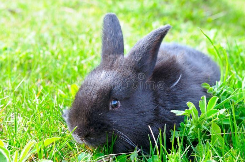 草绿色小的兔子 免版税库存照片