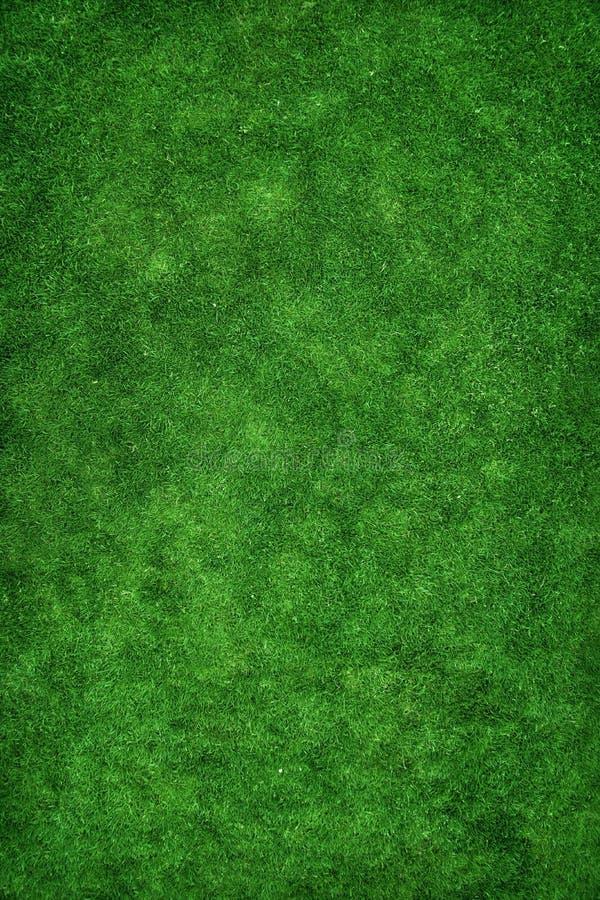 草绿色纹理 库存照片