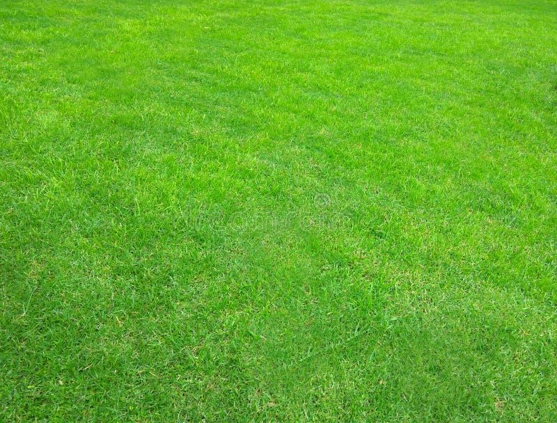 草 草坪 美好的绿色纹理 库存图片