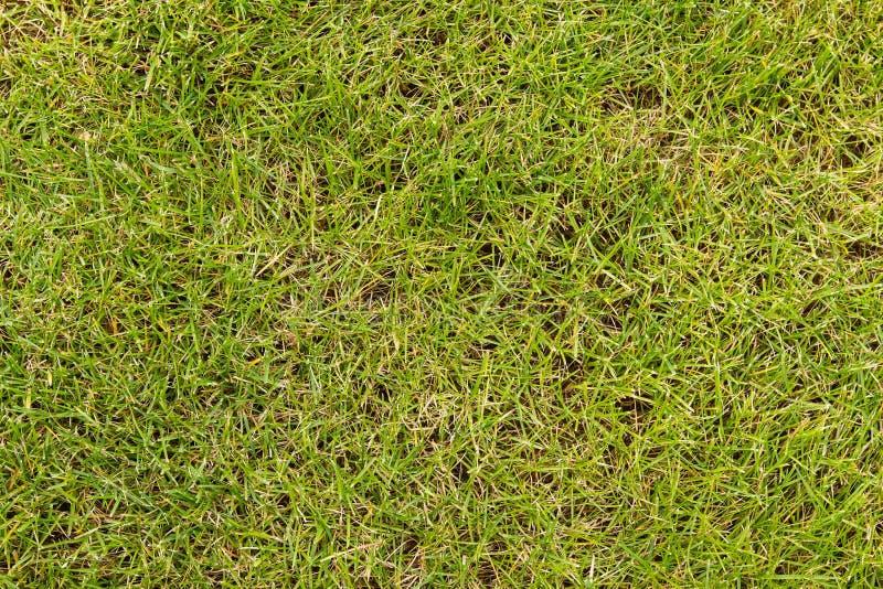Download 绿草 库存照片. 图片 包括有 橄榄球, 设计, 草坪, 户外, 工厂, 环境, 幼木, 公园, 季节, 生态 - 72372258