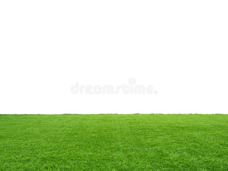 绿草 免版税库存照片