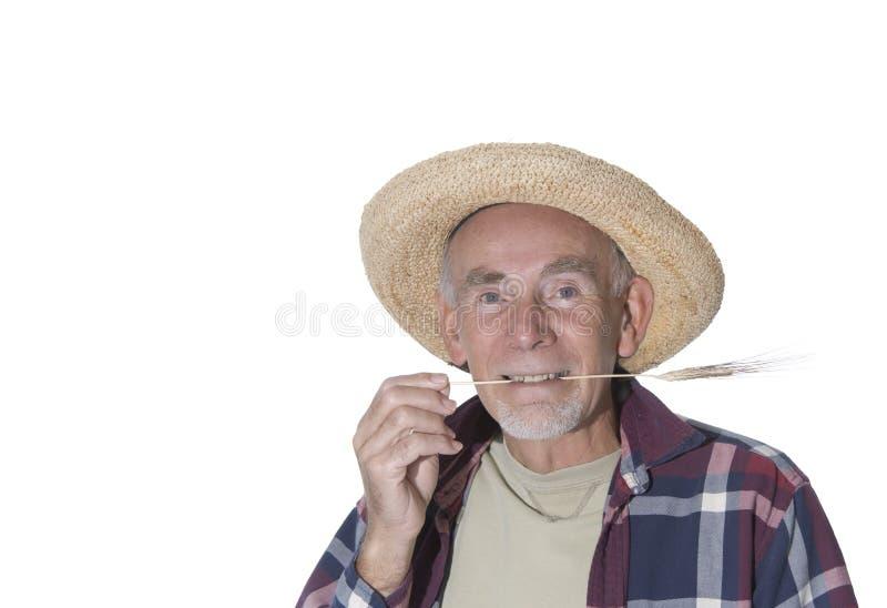 草hayseed老他的嘴 免版税库存照片