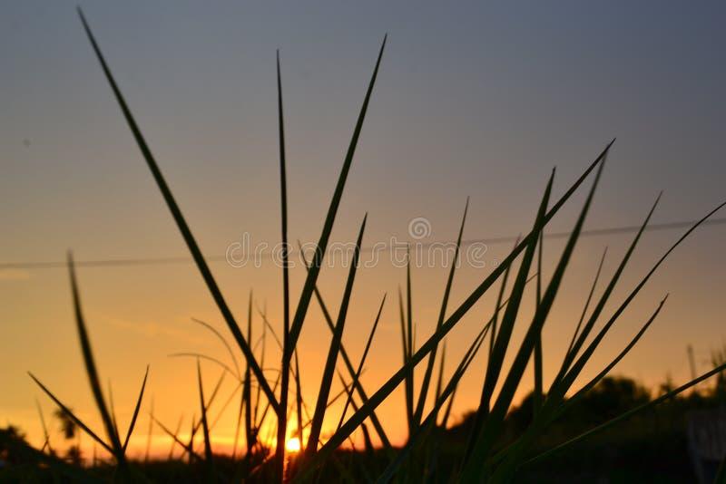 草Shilloute在日落的 库存照片