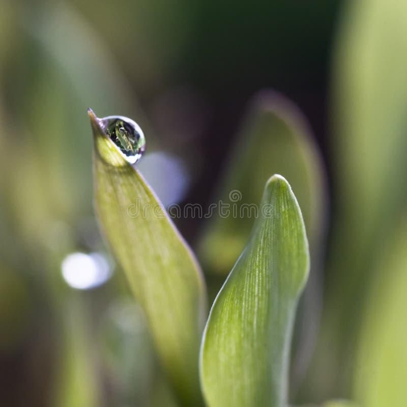 草waterdrops 免版税库存照片